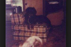 Aquí se aprecia otra silueta debajo del sillón. Foto:Vía Tumblr. Imagen Por:
