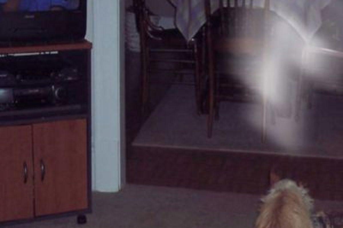 Miren esta luz blanca sobre el perro. Foto:Vía Reddit. Imagen Por: