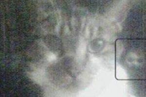 ¿Qué opinan de esta imagen? Foto:Vía Reddit. Imagen Por: