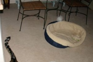 Miren la luz blanca encima de la cama de este gato. Foto:Vía Reddit. Imagen Por: