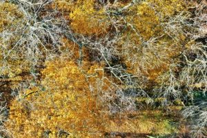 Poitou-Charentes, Francia Foto:Vía Dronestagr.am. Imagen Por: