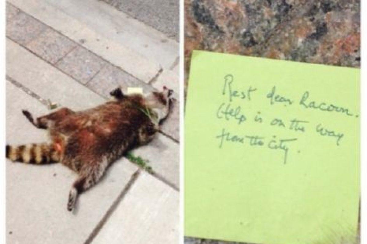 Cerca de las 9 AM, Jason Wagar denunció que había un mapache muerto en la banqueta, frente a una iglesia. Foto:Vía Twitter.com/KrisReports. Imagen Por: