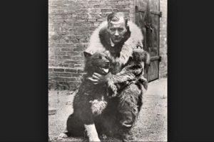 Al lastimarse el perro guía, Balto fue el único capaz de guiar el trineo para llevar los medicamentos hasta los hospitales del pueblo, convirtiéndose en el perro-héroe de Alaska. Foto:Foto: Vía Wikimedia.org. Imagen Por: