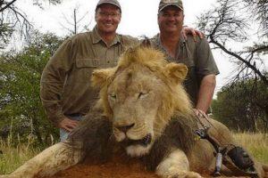Aplicando una nueva ley que complique a los cazadores introducir al país una cabeza o piel de león. Foto:Facebook Archivo. Imagen Por: