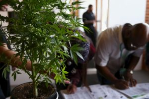 """La """"ley sobre estupefacientes, sustancias psicotrópicas, drogas de uso no autorizado, legitimación de capitales y actividades conexas"""" del año 2002 sanciona penalmente la distribución y venta del cannabis. Foto:Getty Images. Imagen Por:"""