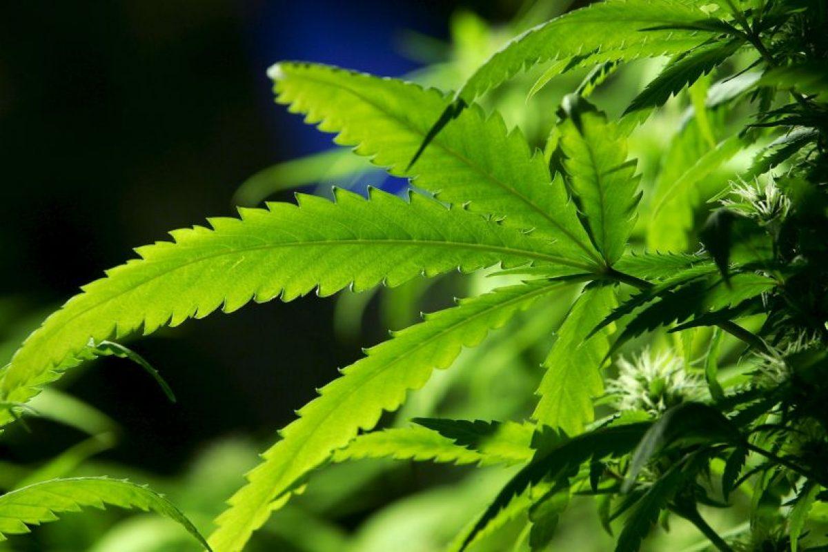 El máximo permitido se estableció entonces en los cinco gramos de marihuana y un gramo de cocaína. Foto:Getty Images. Imagen Por: