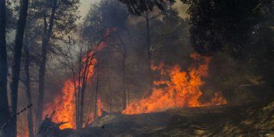 Alerta amarilla por incendios forestales entre las regiones de Coquimbo y Maule
