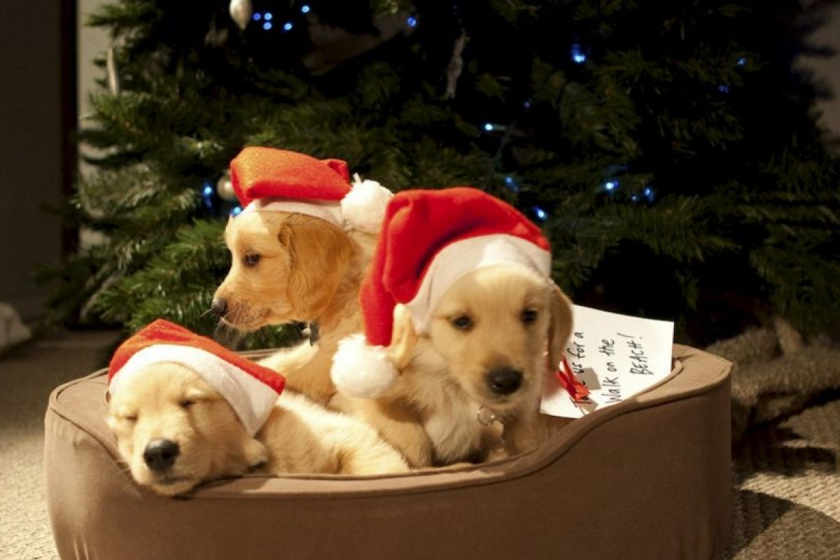 Con la ayuda de cuatro perros Golden Retrievers, la pareja de jubilados Tod y Katherine quieren jugar a ser Cupido para divertirse esta Navidad. Foto:vía Netflix. Imagen Por: