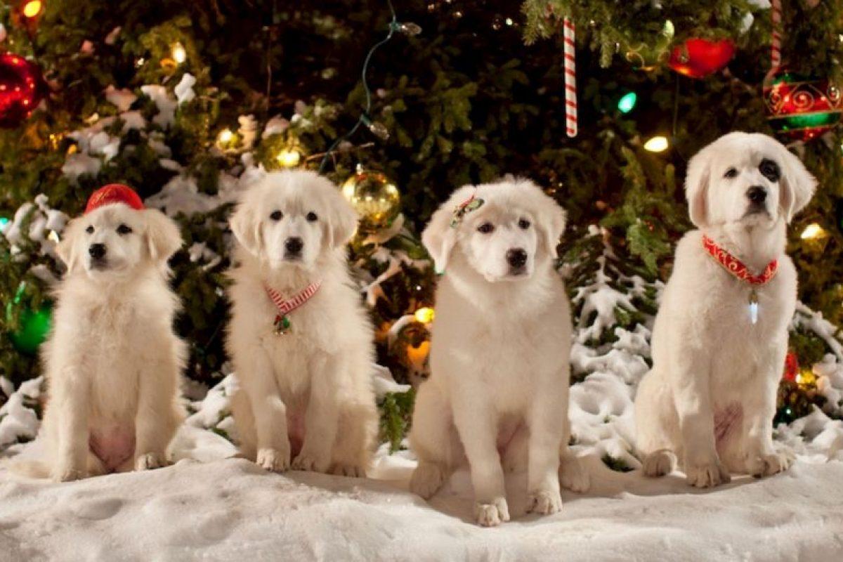 Santa cumple los deseos de todos los niños de Pineville, pero algo sale mal y el espíritu de la Navidad comienza a desaparecer. Foto:vía Netflix. Imagen Por: