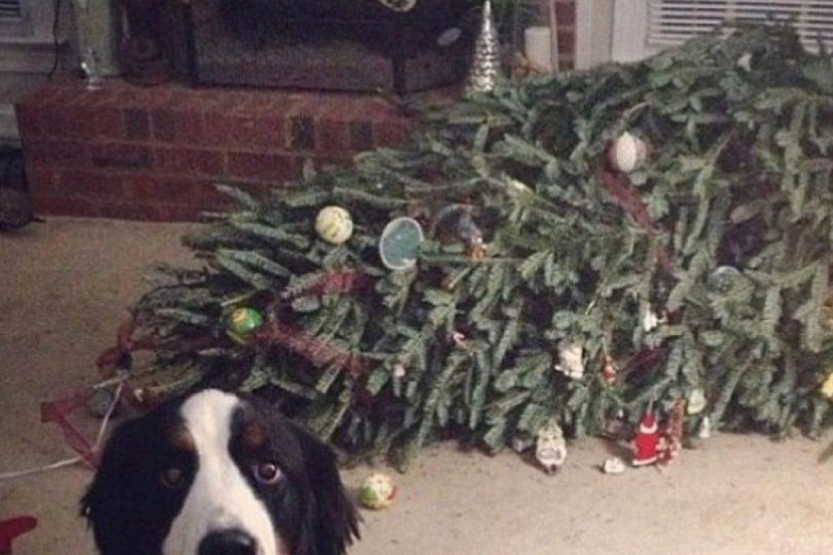 El perro no puede con la culpa Foto:Reddit. Imagen Por: