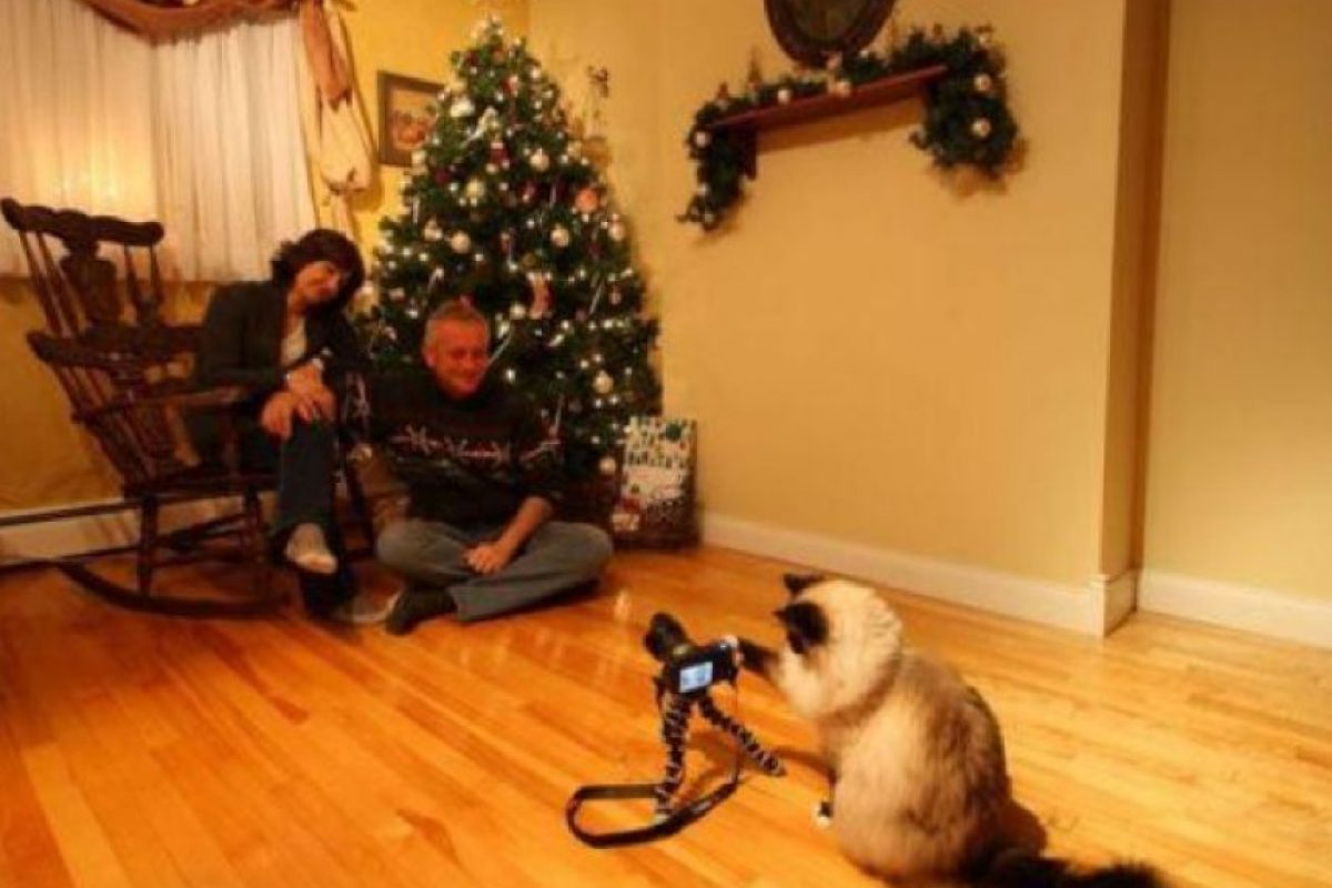 Casual, el gato tomando la foto navideña Foto:Know Your Meme. Imagen Por: