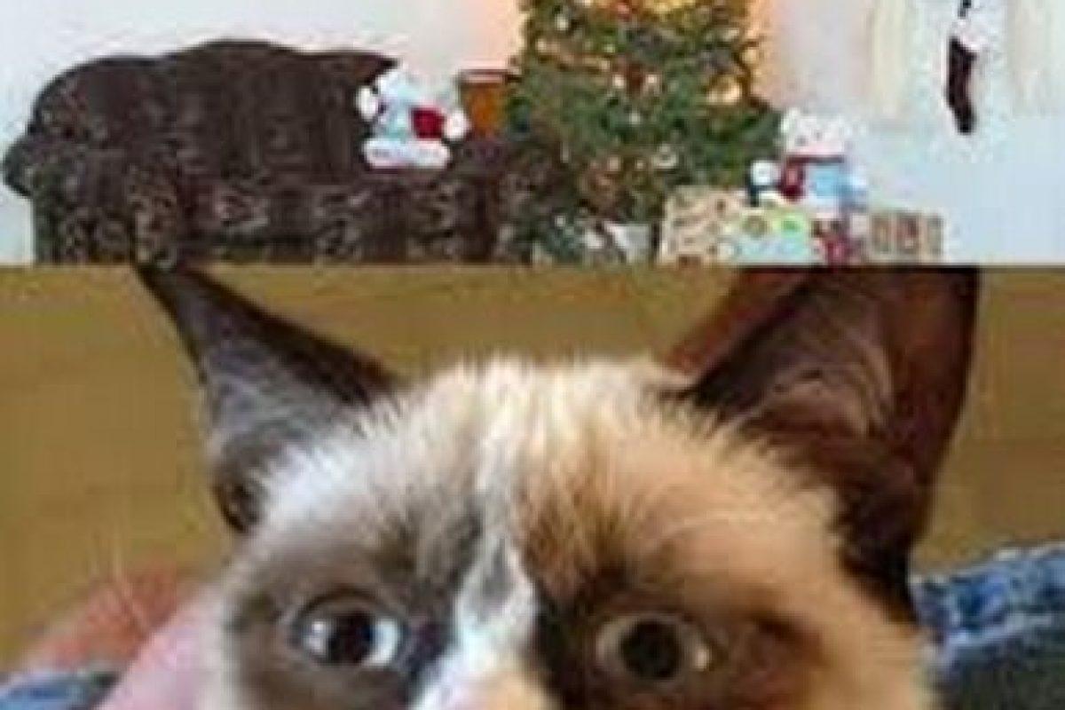 ¡Esto es lo que imaginan todos los gatos! Foto:Know Your Meme. Imagen Por:
