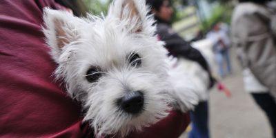 A tener cuidado: altas temperaturas pueden provocar gran estrés en las mascotas