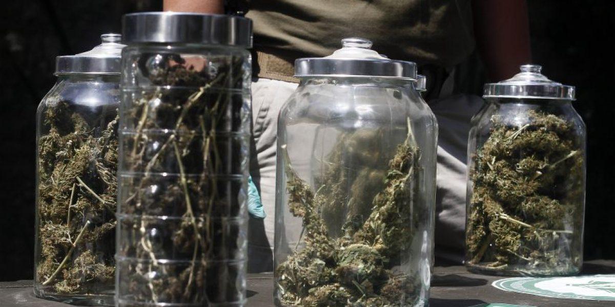 Denuncia por vulneración de derechos del niño permitió descubrir laboratorio de marihuana