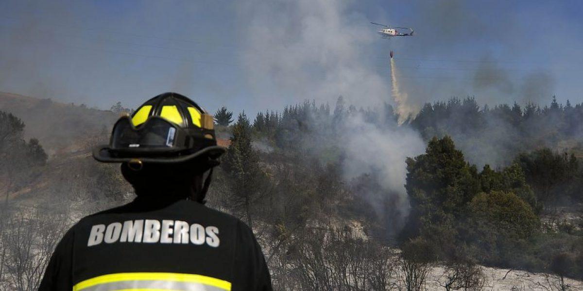Equipos de emergencia controlaron incendio forestal en Ritoque