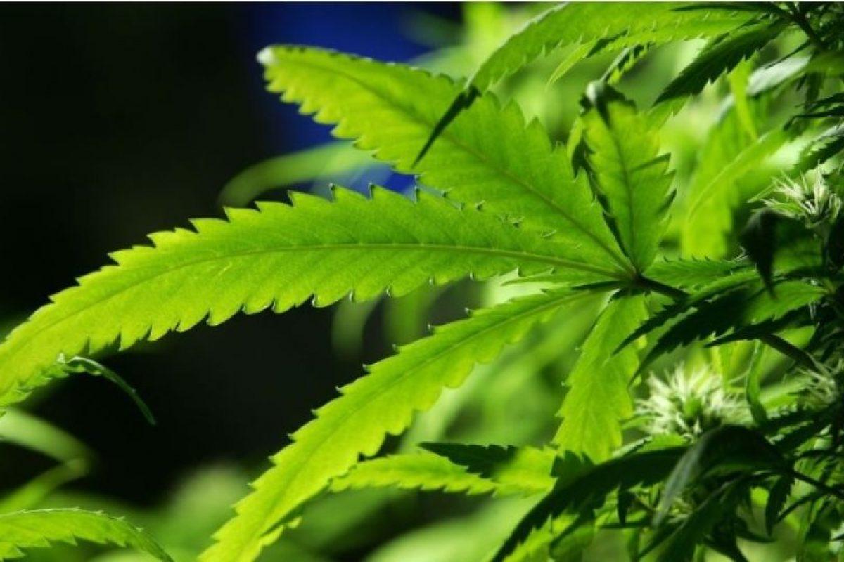 Prohibiciones: Queda prohibido conducir bajo efectos de marihuana. No se podrá fumar en el trabajo o estando a la orden del empleador. Ni en espacios cerrados, deportivos o educativos. Foto:Getty Images. Imagen Por: