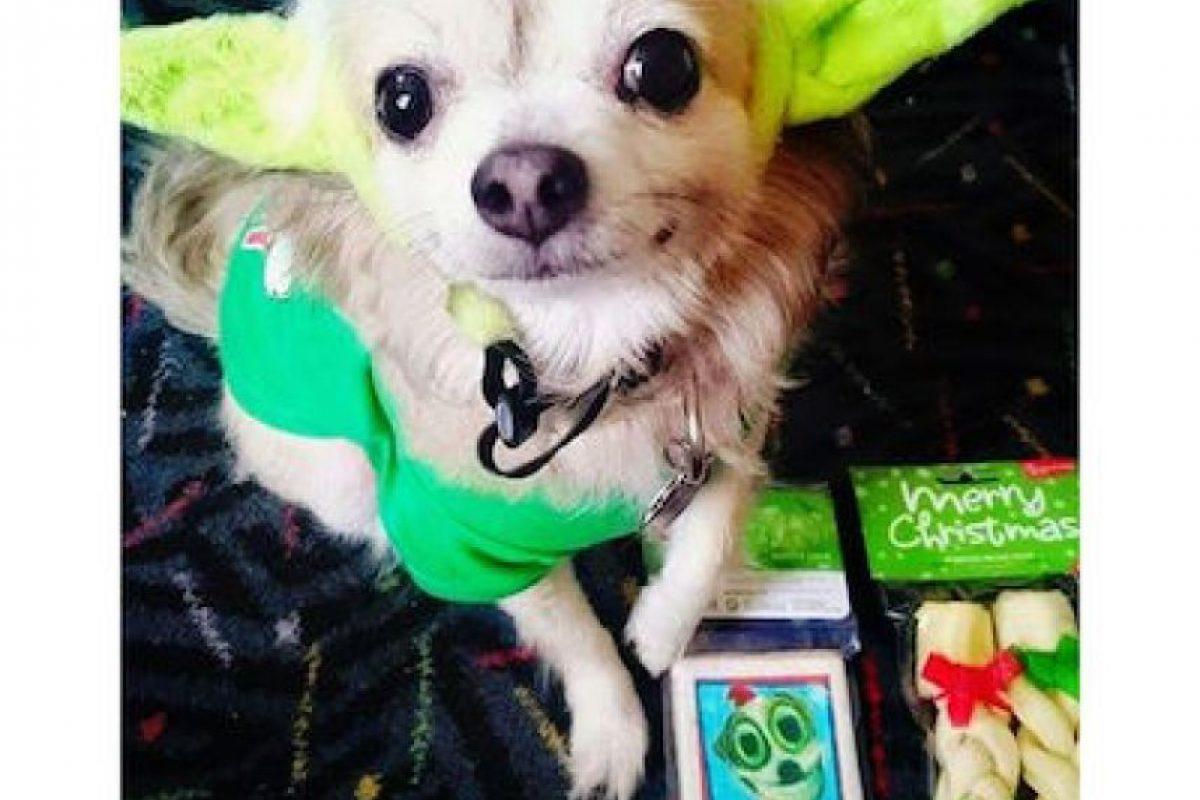 Algunos vistieron a sus mascotas Foto:Instagram.com. Imagen Por: