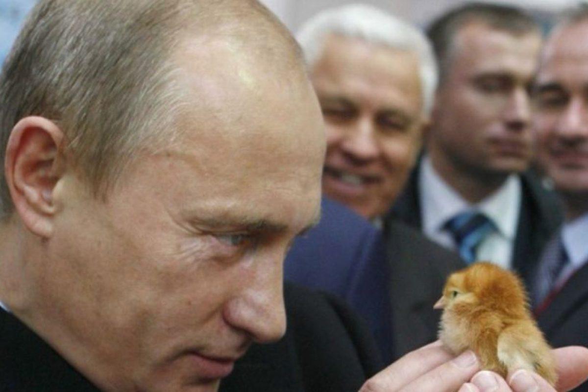 Por último, Putin se tomó esta foto con un pollito Foto:Imgur/Reddit. Imagen Por: