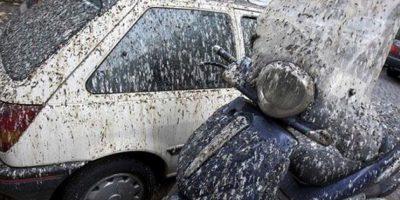 Plaga de excrementos en Roma obliga a usar paraguas