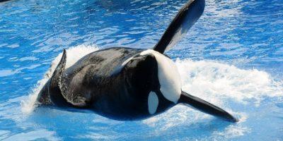 SeaWorld demanda a California por prohibición de criar orcas