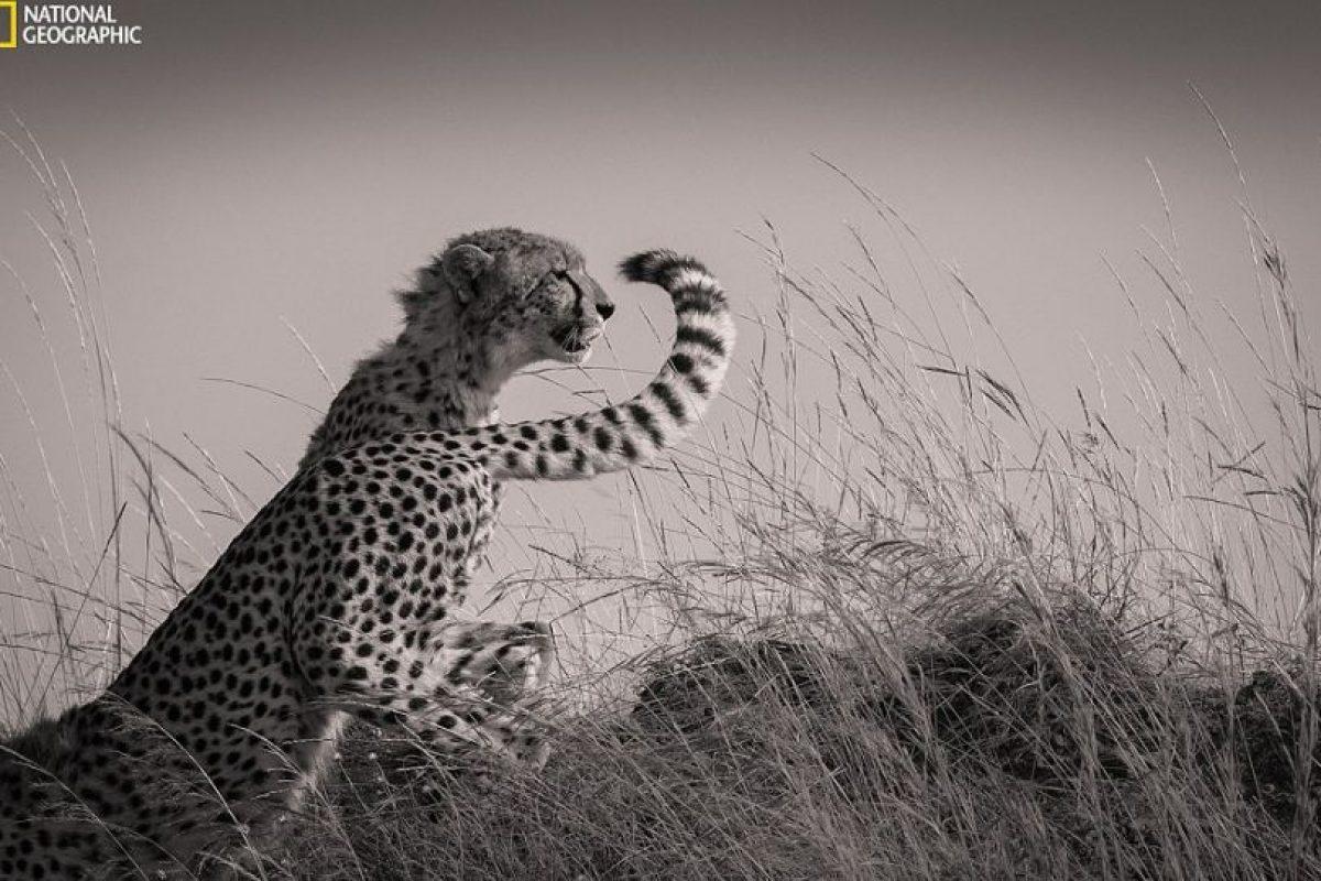 Foto:National Geographic Photo Contest 2015. Imagen Por:
