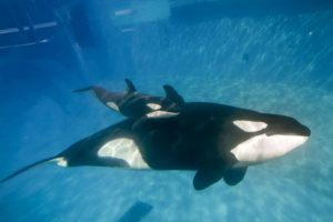 No son animales que ataquen directamente al ser humano Foto:Getty Images. Imagen Por: