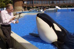De jóvenes, se les puede confundir con delfines Foto:Getty Images. Imagen Por: