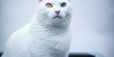 Conoce a los 7 Magníficos: los gatos más famosos de Inglaterra