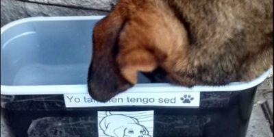 Animalistas de Puerto Montt inician campaña para apoyar a perros callejeros