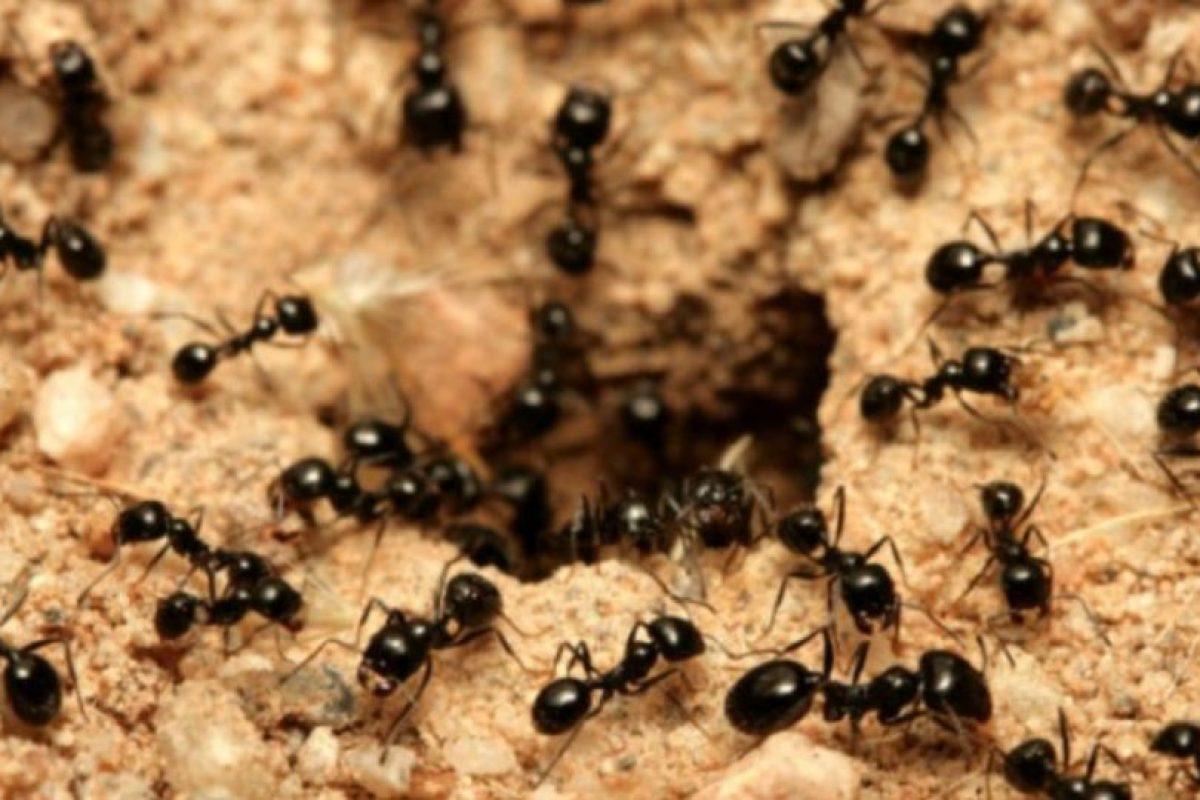 3- Devorado por hormigas. Otra de las muertes horribles ocurrió gracias a los paramilitares colombianos. Foto:vía Tumblr.com. Imagen Por: