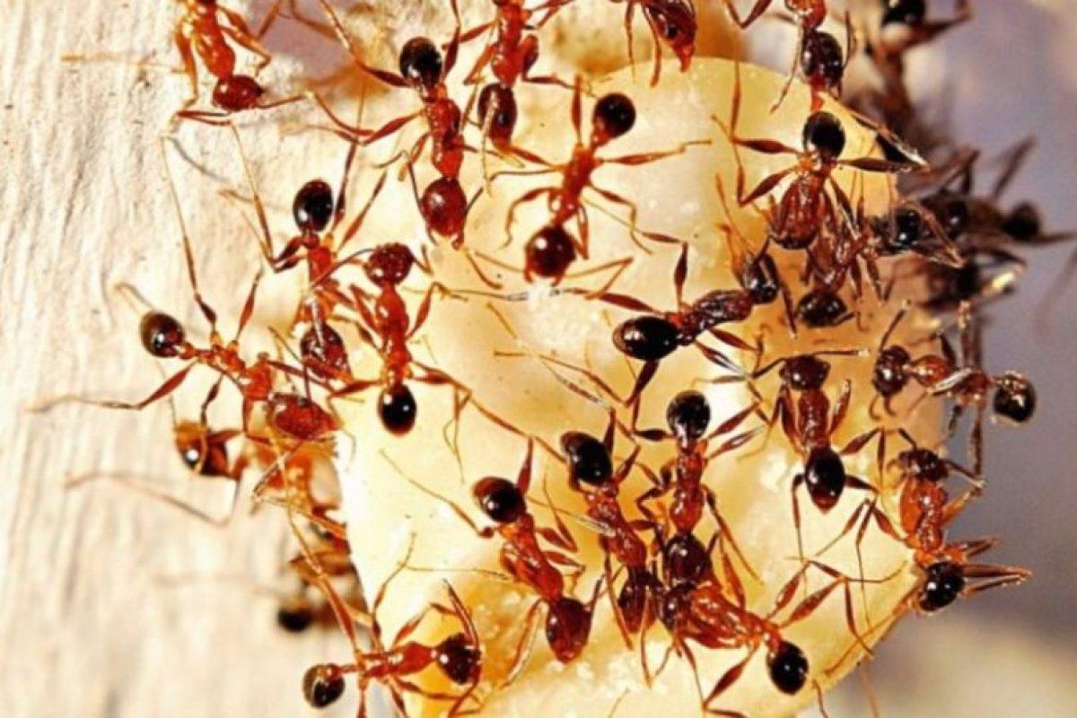 Y ahí las dejaban morir. Foto:vía Tumblr.com. Imagen Por: