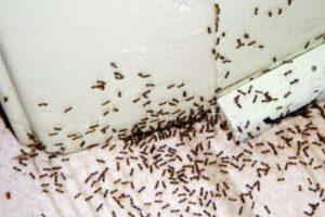 Asimismo, las hormigas también atacan a viajeros desprevenidos al meterse por sus cavidades corporales. Esto pasó con un viajero en un safari africano. Foto:vía Tumblr.com. Imagen Por: