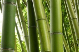 7- La muerte del bambú. Consistía en amarrar a una persona de pies y manos. Con un bambú creciendo debajo. Foto:Getty Images. Imagen Por: