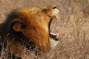 5- Ser devorado. Una sensación espantosa, apenas el depredador en cuestión comienza a herir y a atravesar la carne. Foto:Getty Images. Imagen Por: