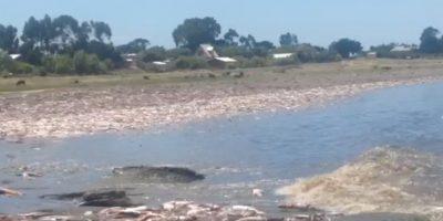 Senador Navarro denunció masiva varazón de jibias en Isla Santa María