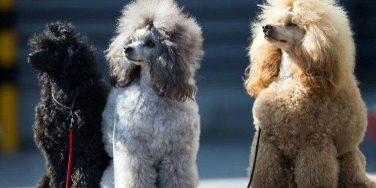 ¿Lo sabías? Los perros son capaces de percibir alegría o enfado en los humanos