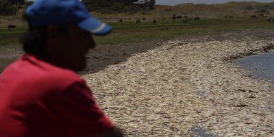 Vecinos de Isla Santa María acusan mal olor por descomposición de jibias varadas