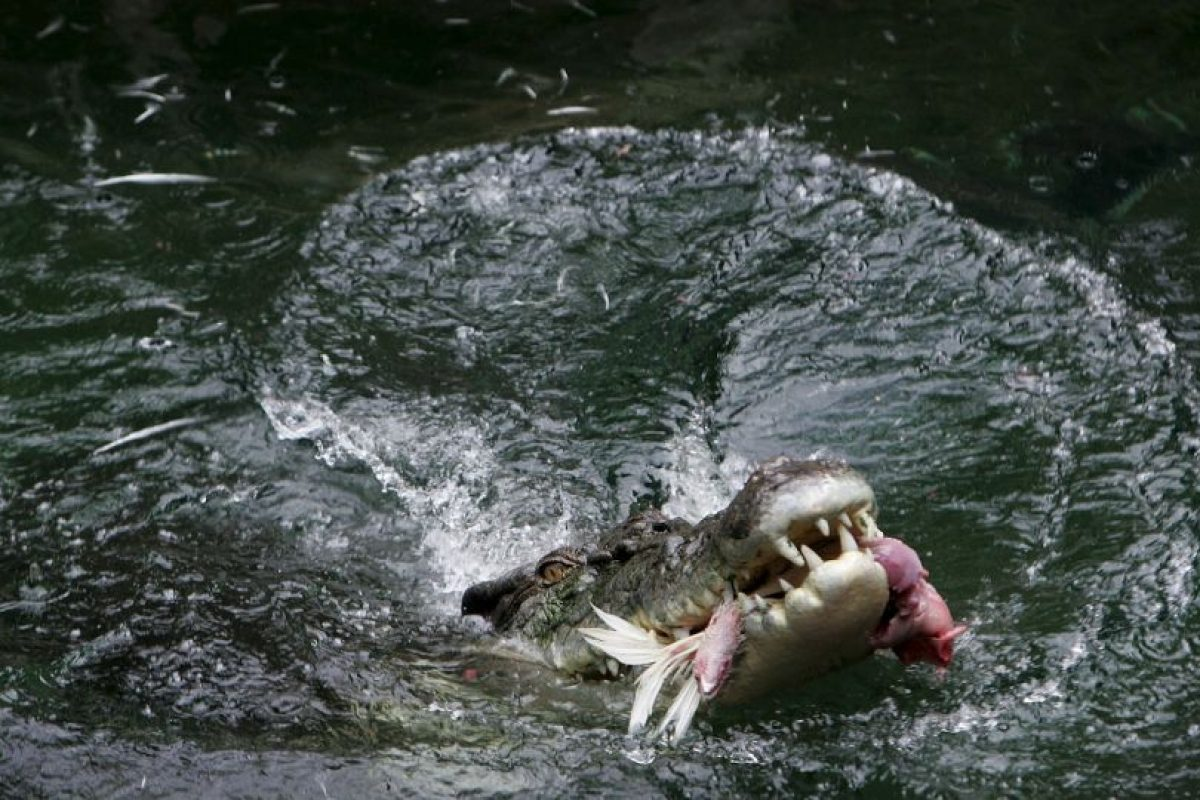 Sus ataques desde la orilla son fulminantes y brutales. Foto:Getty Images. Imagen Por: