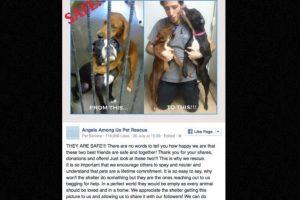 El caso causó tal revuelo, que terminaron siendo adoptadas. Foto:vía Facebook. Imagen Por: