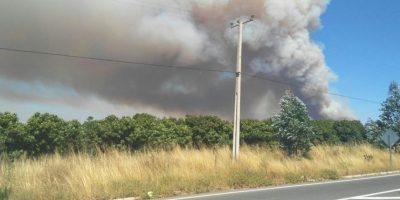 Onemi declaró alerta roja en comuna de Santo Domingo por incendio forestal