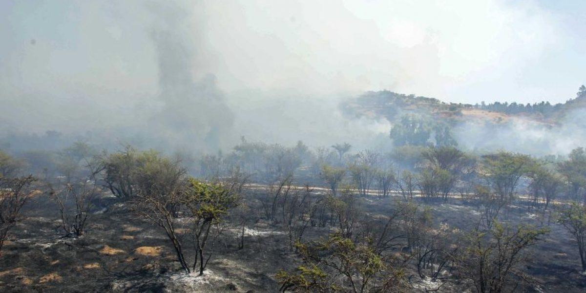 Levantan alerta roja por incendio forestal en Villa Alemana
