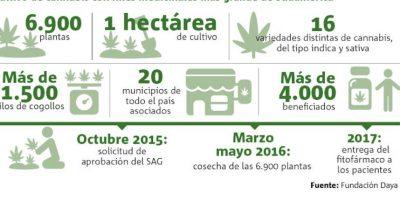 Presentan el cultivo de cannabis medicinal más grande de Sudamérica