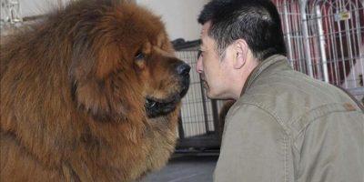 ¿Cuál es el origen del perro doméstico?