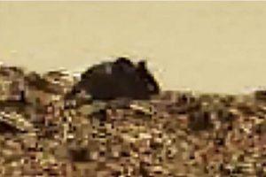 Y este es el supuesto ratón gigante marciano Foto:NASA. Imagen Por: