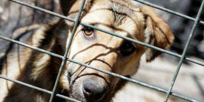Villa Alemana: hombre muere tras feroz ataque de perros en plena vía pública