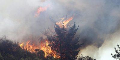 Onemi declara Alerta Roja por incendio forestal en San Antonio