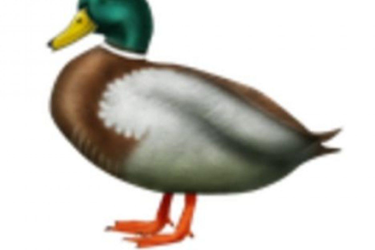 Pato. Foto:vía emojipedia.org. Imagen Por: