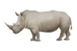 Rinoceronte. Foto:vía emojipedia.org. Imagen Por: