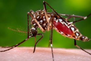 Muy rara vez requiere hospitalización, no hay tratamiento curativo pero puede ser manejado en casa, teniendo muy en cuenta la hidratación, el reposo y un protector contra moscos. Foto:AP. Imagen Por: