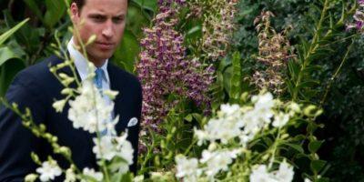 Príncipe Guillermo consternado tras trágica muerte de aventurero británico en Punta Arenas